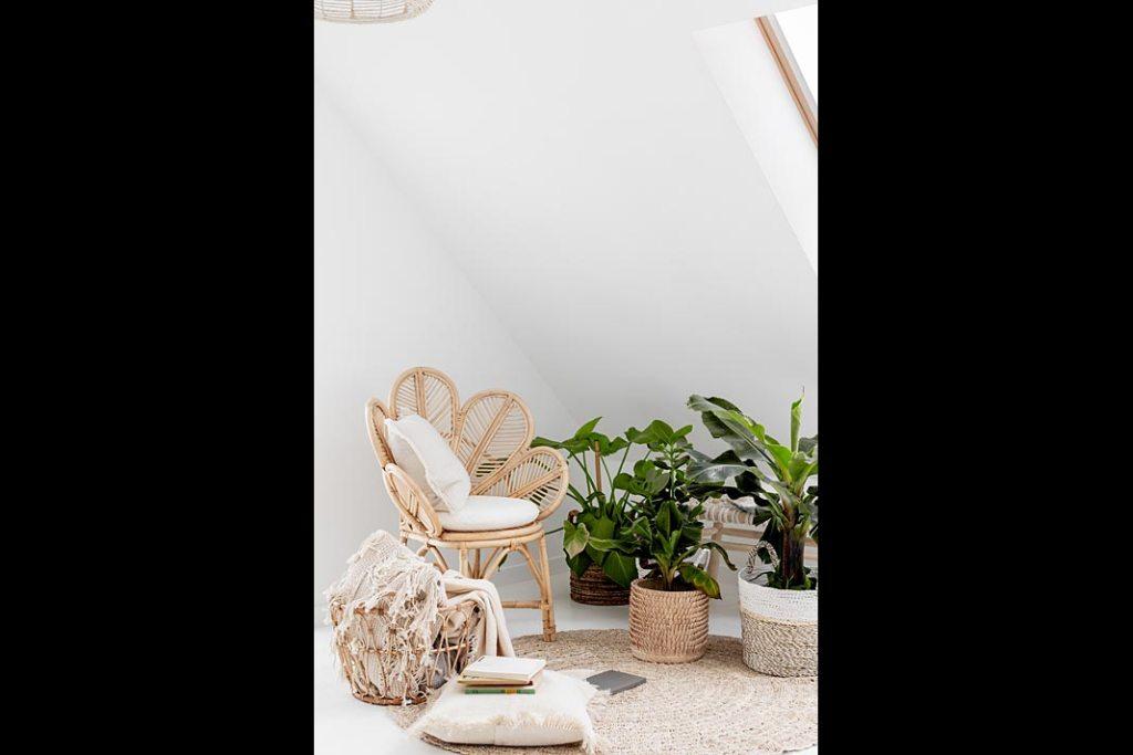 White boho - ciekawe egzotyczne rośliny znajdującą się w każdym zakątku domu