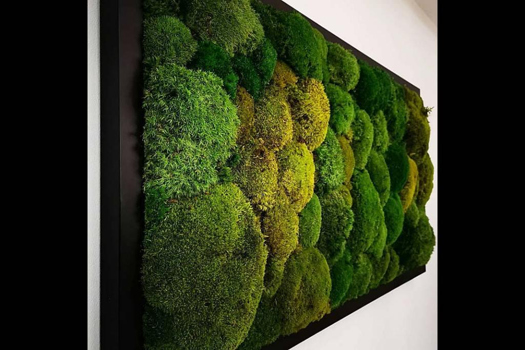Obraz z mchów poduszkowych z oferty Atelier Mchu autorstwa Dominiki Cempel