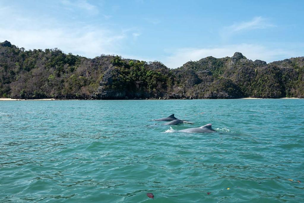 Oreczki krótkogłowe żyjące w rzekach oraz przybrzeżnych akwenach morskich południowo-wschodniej Azji