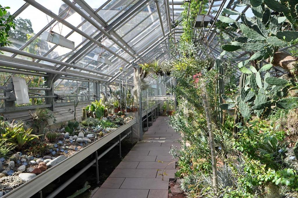 Uniwersytecki Ogród Botaniczny w Bazylei. Kaktusy i sukulenty w pawilonie pustynnym