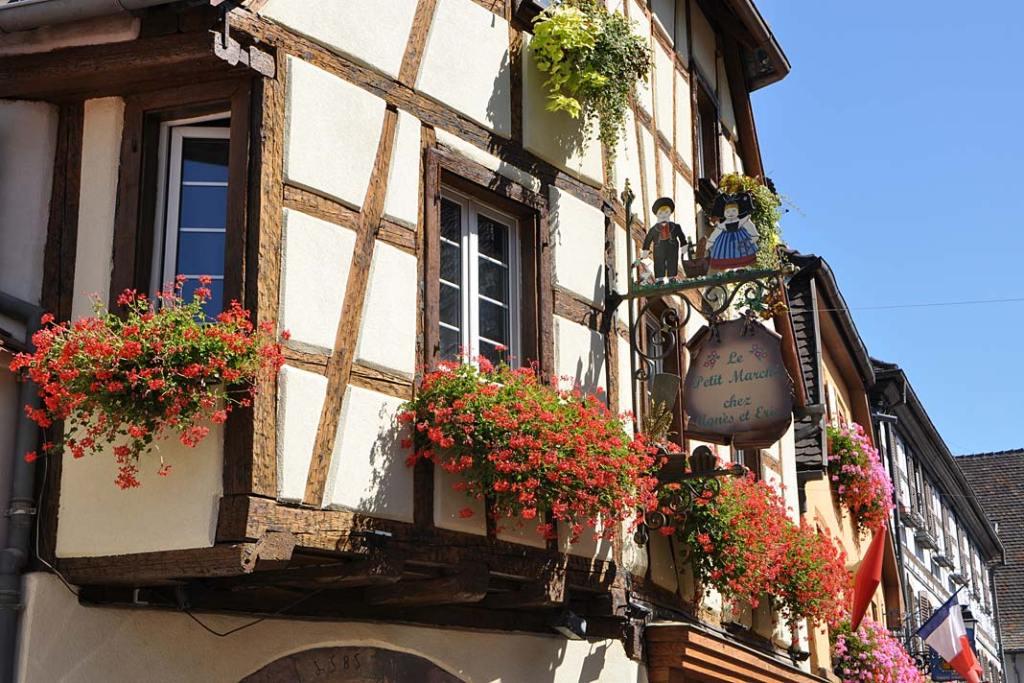 Kwitnące rośliny zdobią fasady domów w Eguisheim
