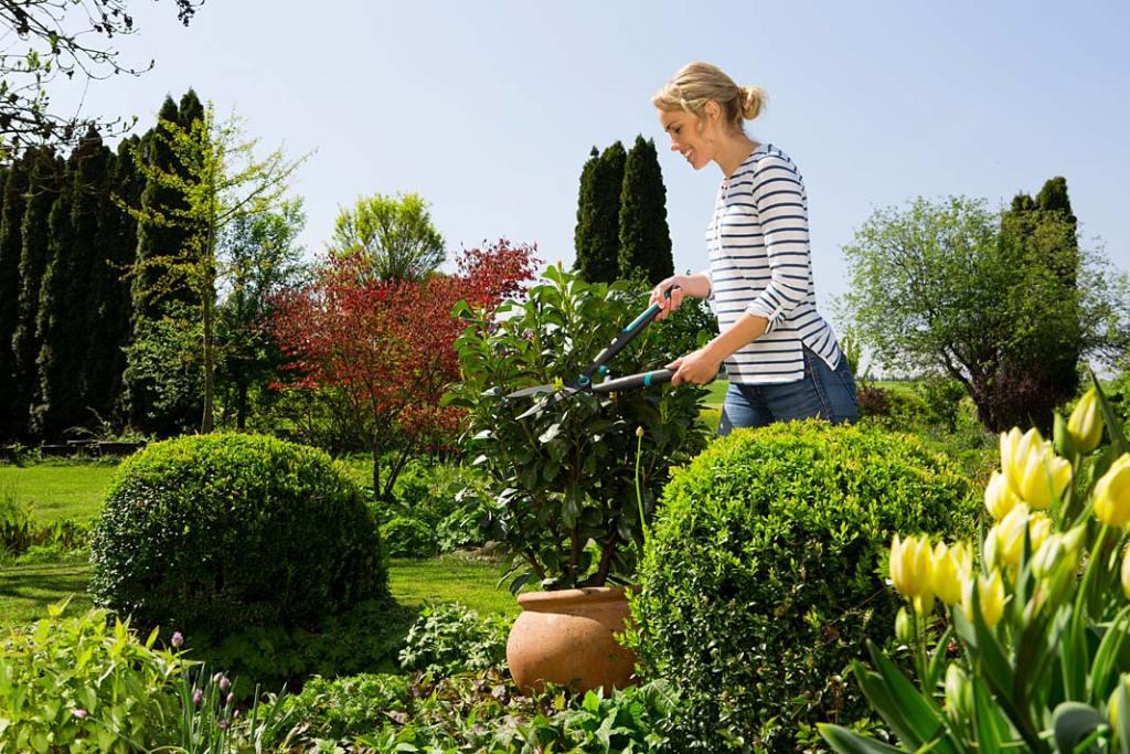 Wiosna w ogrodzie. Nożyce do żywopłotu EasyCut Gardena