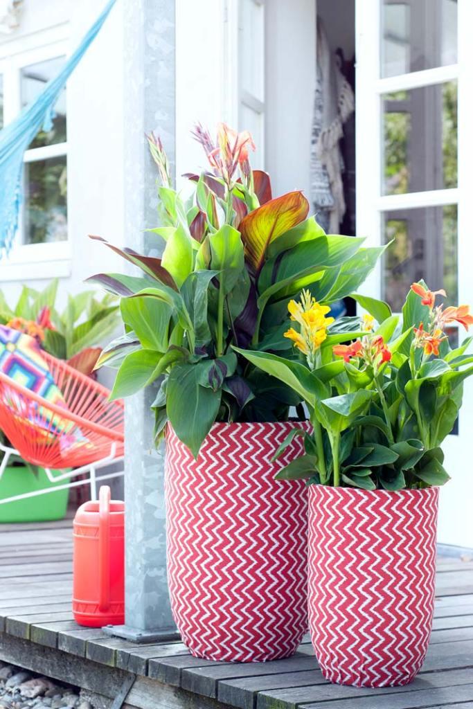 Ogród na wiosnę. Pacioreczniki w czerwono-białych donicach
