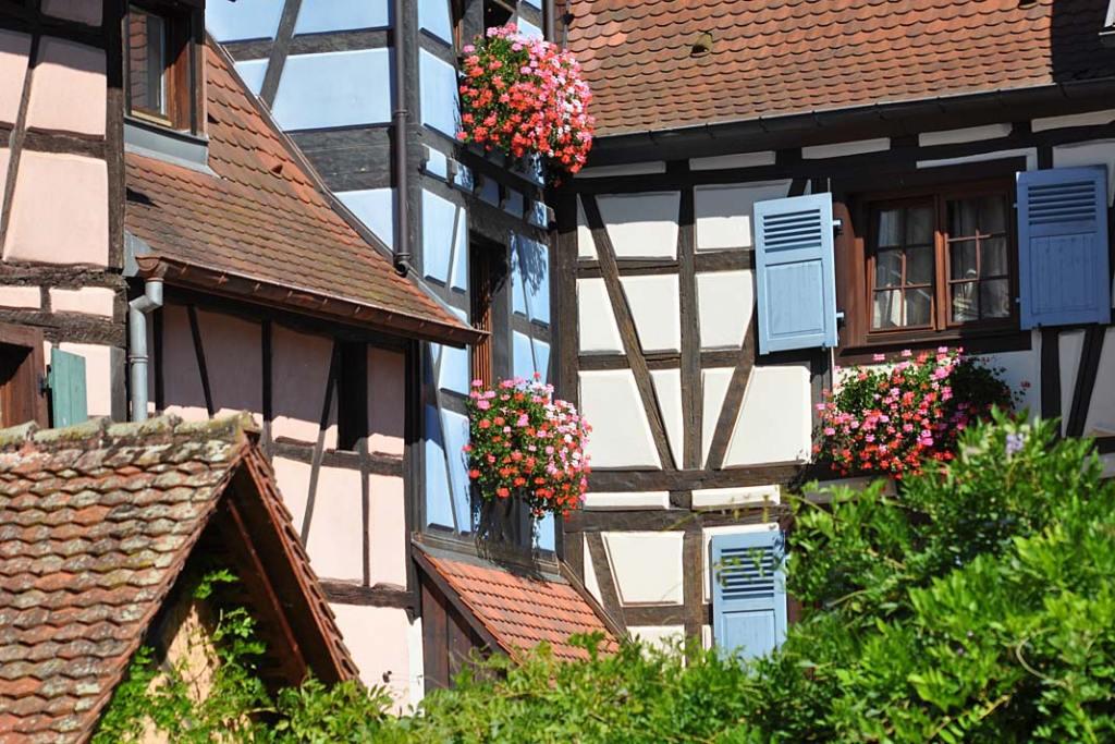 Pelargonie - ozdoba domów w Equisheim