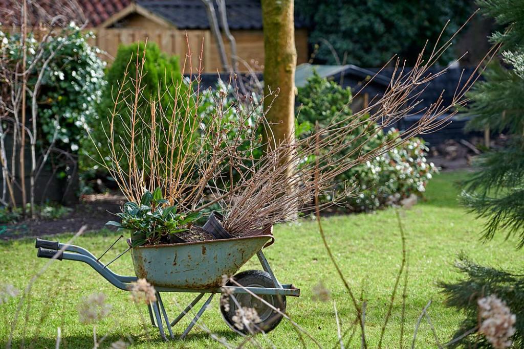 Wiosna w ogrodzie. Sadzonki krzewów, The Joy of Plants