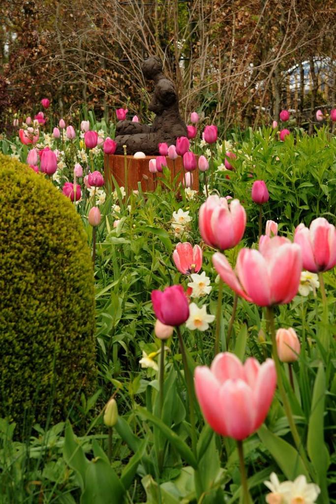 Aranżacja ogrodu na wiosnę: tulipany Pink Impression