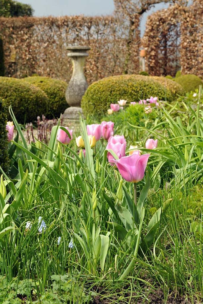 Aranżacja ogrodu na wiosnę - tulipany