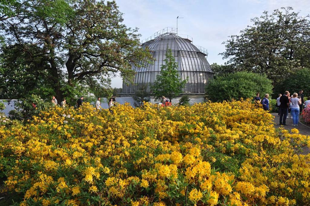 Ogrody i parki Kijowa. Azalia oraz szklarnie roślin tropikalnych w ogrodzie botanicznym w Kijowie