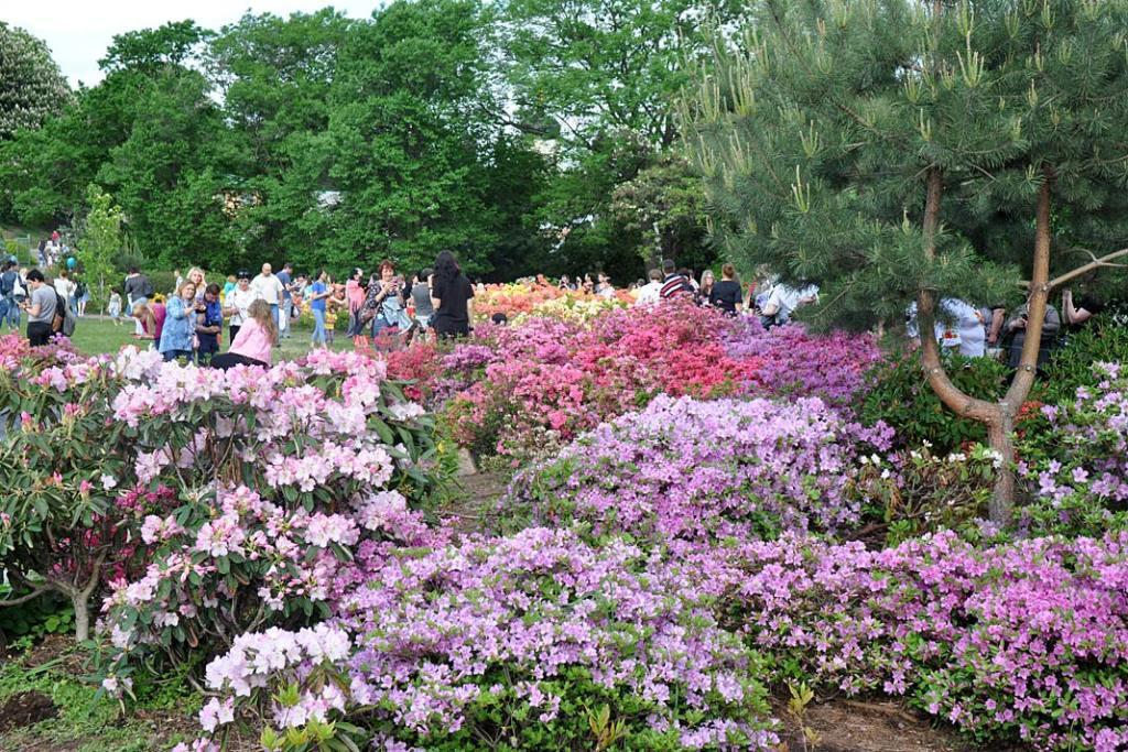 Ogrody i parki Kijowa. Kijowska kolekcja różaneczników