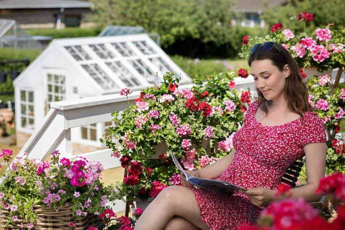 Kolorowe pelargonie na balkonie, propozycja Pelargonium for Europe