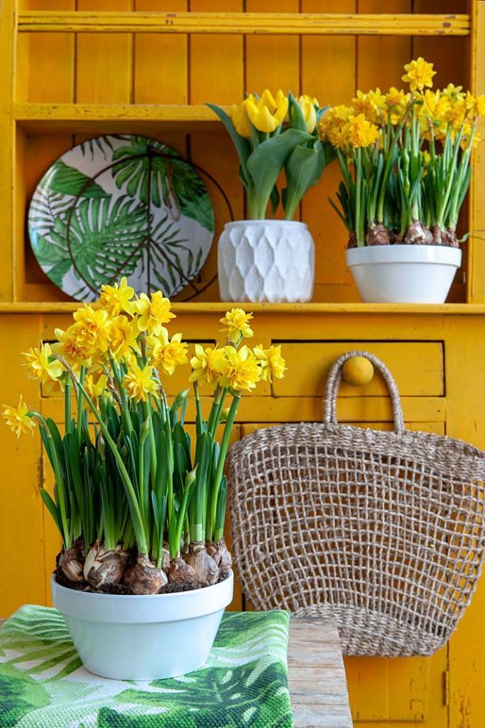 Kolor w kuchni, żółte narcyzy i tulipany ibulb