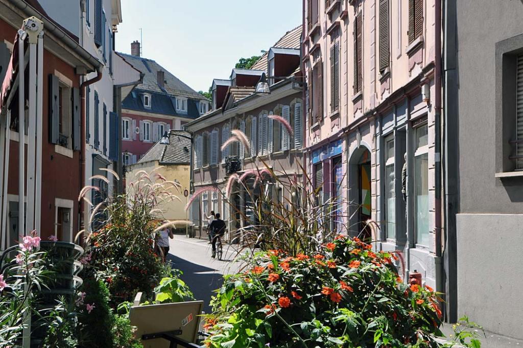 Ogrody Miluzy. Kompozycje roślin na ulicach miasta