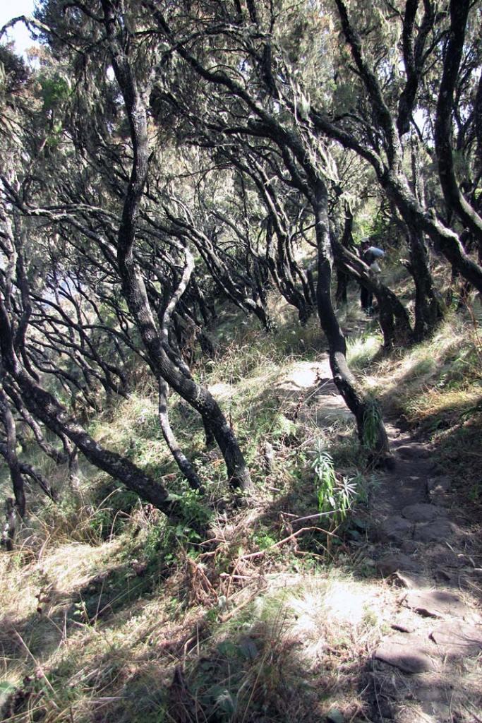 Niższe partie gór Semien porastają gęste lasy