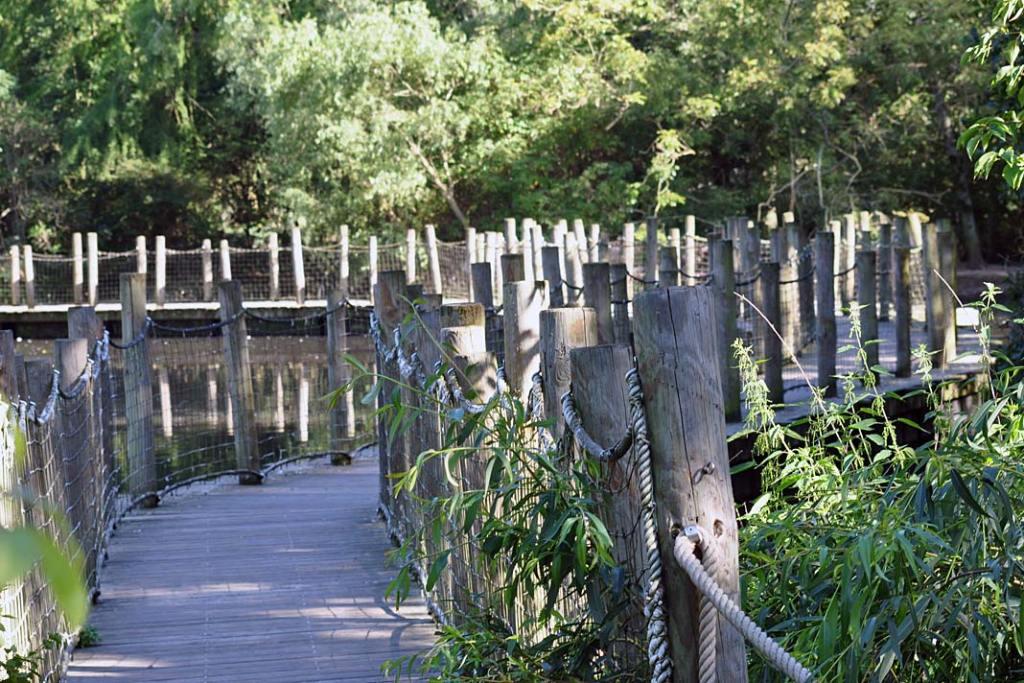 Ogród zoobotaniczny w Miluzie. Most umożliwiający podziwianie roślin wodno-błotnych