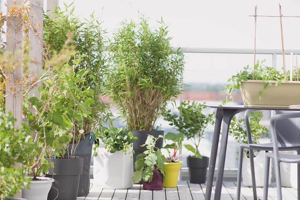 Letni salon na balkonie w otoczeniu roślin