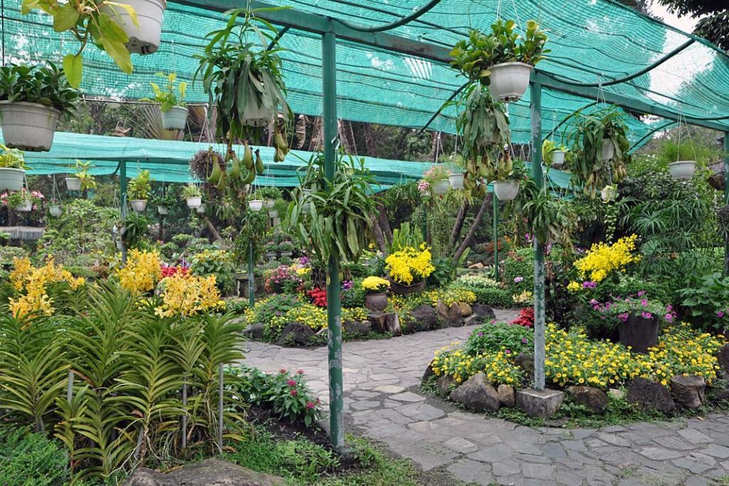 Tropikalne ogrody Sajgonu. Delikatne rośliny cieniolubne chroni się przed słońcem zapomocą cieniówek