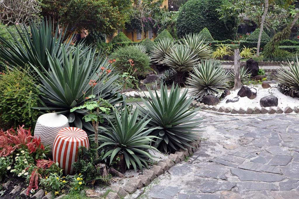 Tropikalne ogrody Sajgonu. Jeden zkilku skwerów roślin sucholubnych naterenie ogrodu botanicznego