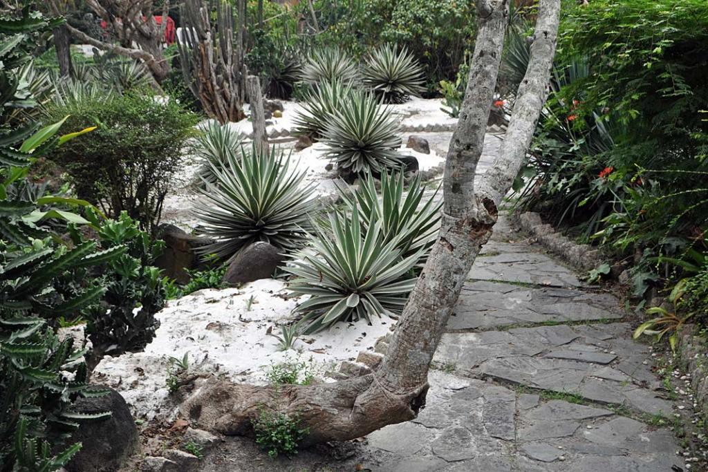 Kompozycja roślin sucholubnych wogrodzie botanicznym w Sajgonie