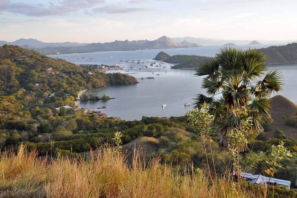 Labuan Bajo -port nawyspie Flores skąd wypływają łodzie na Komodo
