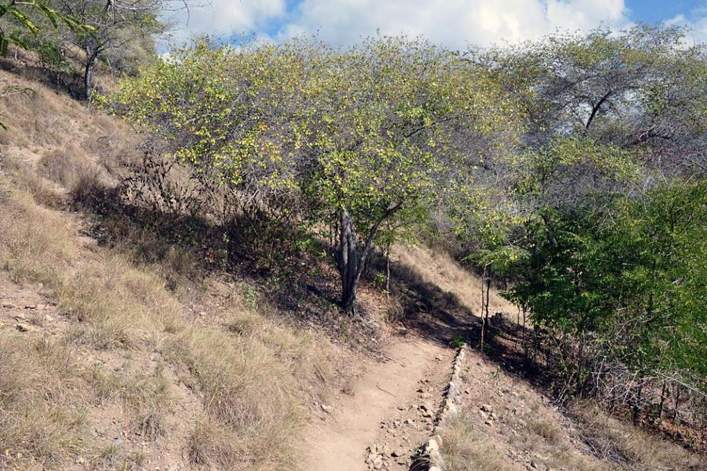 NaKomodo wytyczono kilka szlaków, które można przemierzać tylko wtowarzystwie licencjonowanego przewodnika