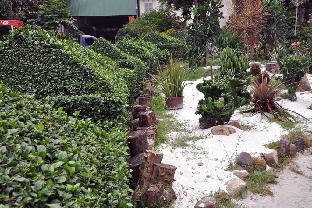 Tropikalne ogrody Sajgonu. Szczelny żywopłot oddziela rośliny sucholubne odpozostałej części ogrodu botanicznego