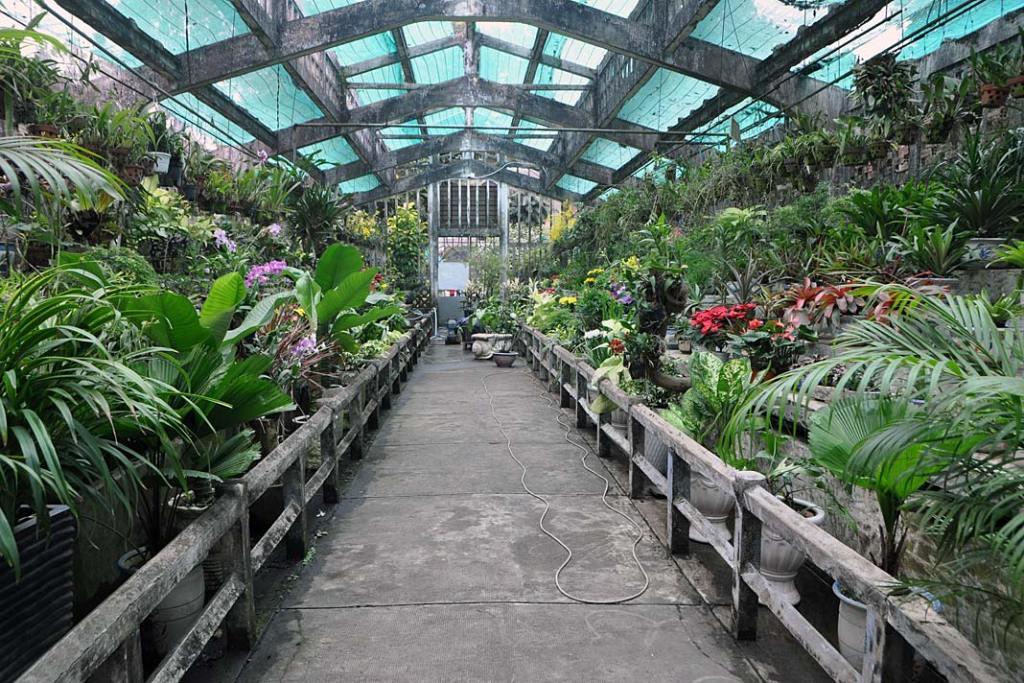 W kwiaciarniach w Sajgonie kupić można tropikalne rośliny